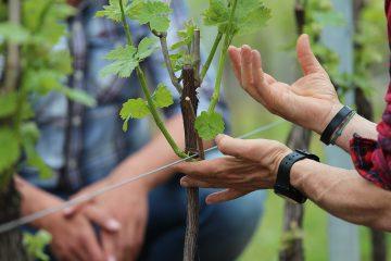Winery Experience per NextInWine 2015