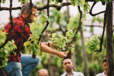 Tutoraggio pratico in vigna | Feudi di San Gregorio | Taurasi | Campania