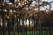 Pergole | Valpolicella | Verona