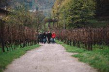 Scuola 2016/17 | Bellavista | Franciacorta | Lombardia
