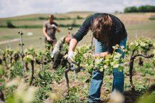 Cordon champenoise | Vallée de la Marne | Champagne
