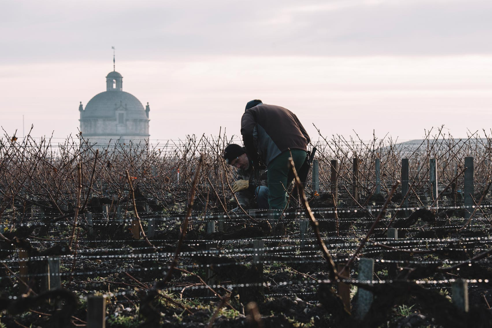 Tutoraggio in vigna | Château Latour | Pauillac | Bordeaux