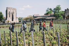 Tutoraggio in vigna | Clos Fourtet | Saint Émilion | Bordeaux