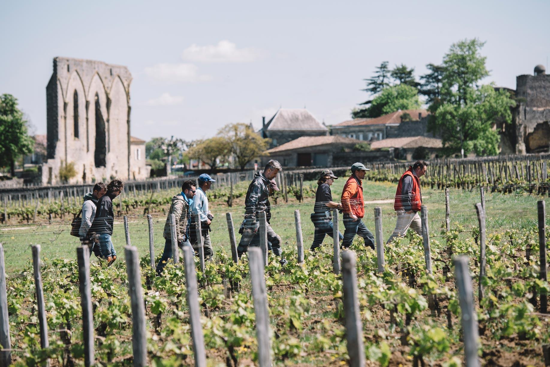 Tutoraggio in vigna   Clos Fourtet   Saint Émilion   Bordeaux