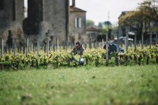 Tutoraggio in vigna | Château Les Grandes Murailles | Saint Émilion | Bordeaux