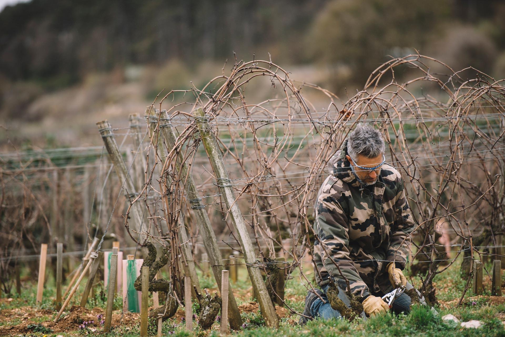 Tutoraggio in vigna | Domaine d'Auvenay | Bonnes Mares | Bourgogne
