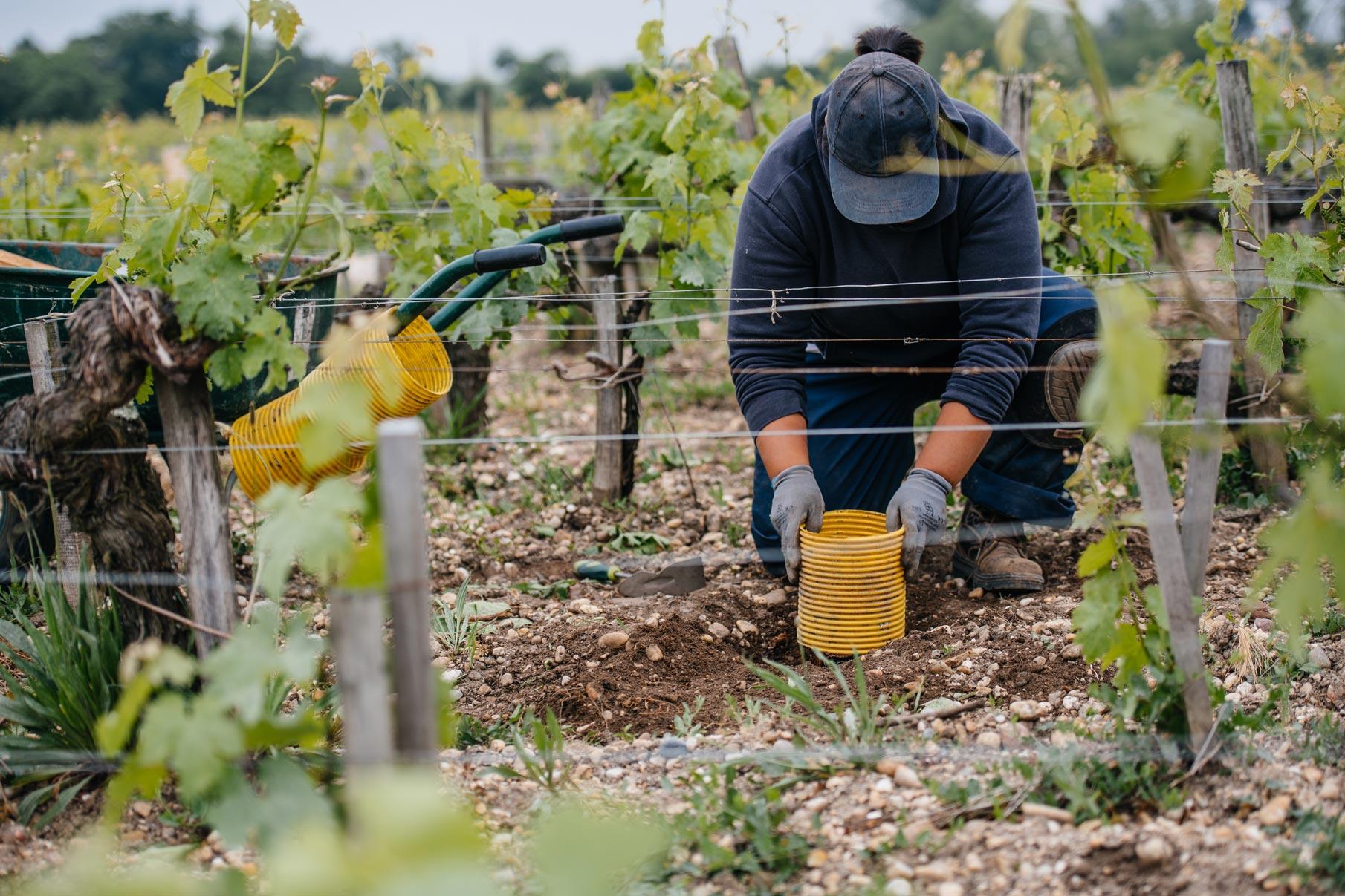 Formazione all'innesto | Château Pontet-Canet | Pauillac | Bordeaux