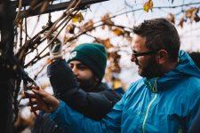 Tutoraggio pratico in vigna | Valpolicella | Verona