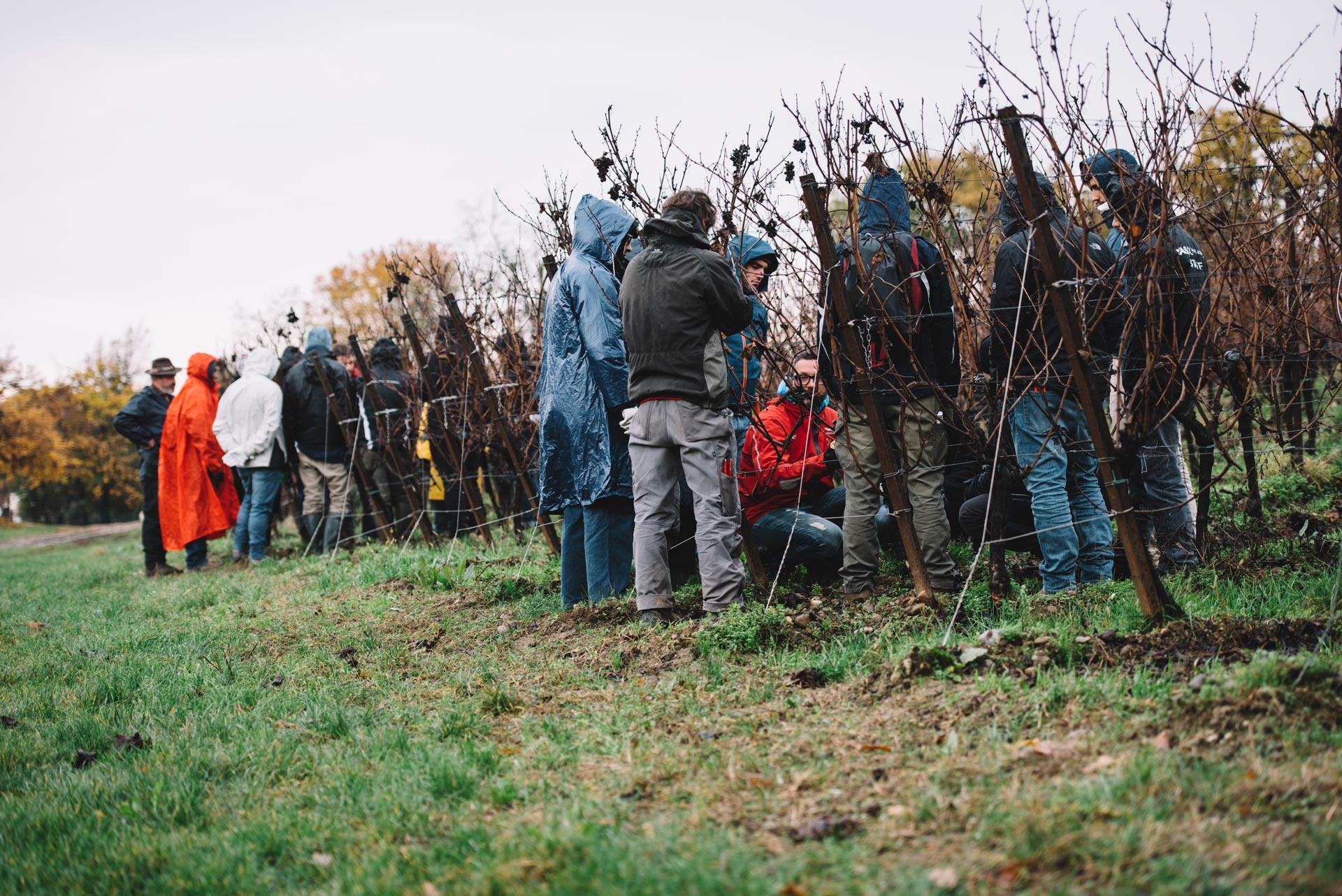 Tutoraggio in vigna | Bellavista | Franciacorta | Lombardia