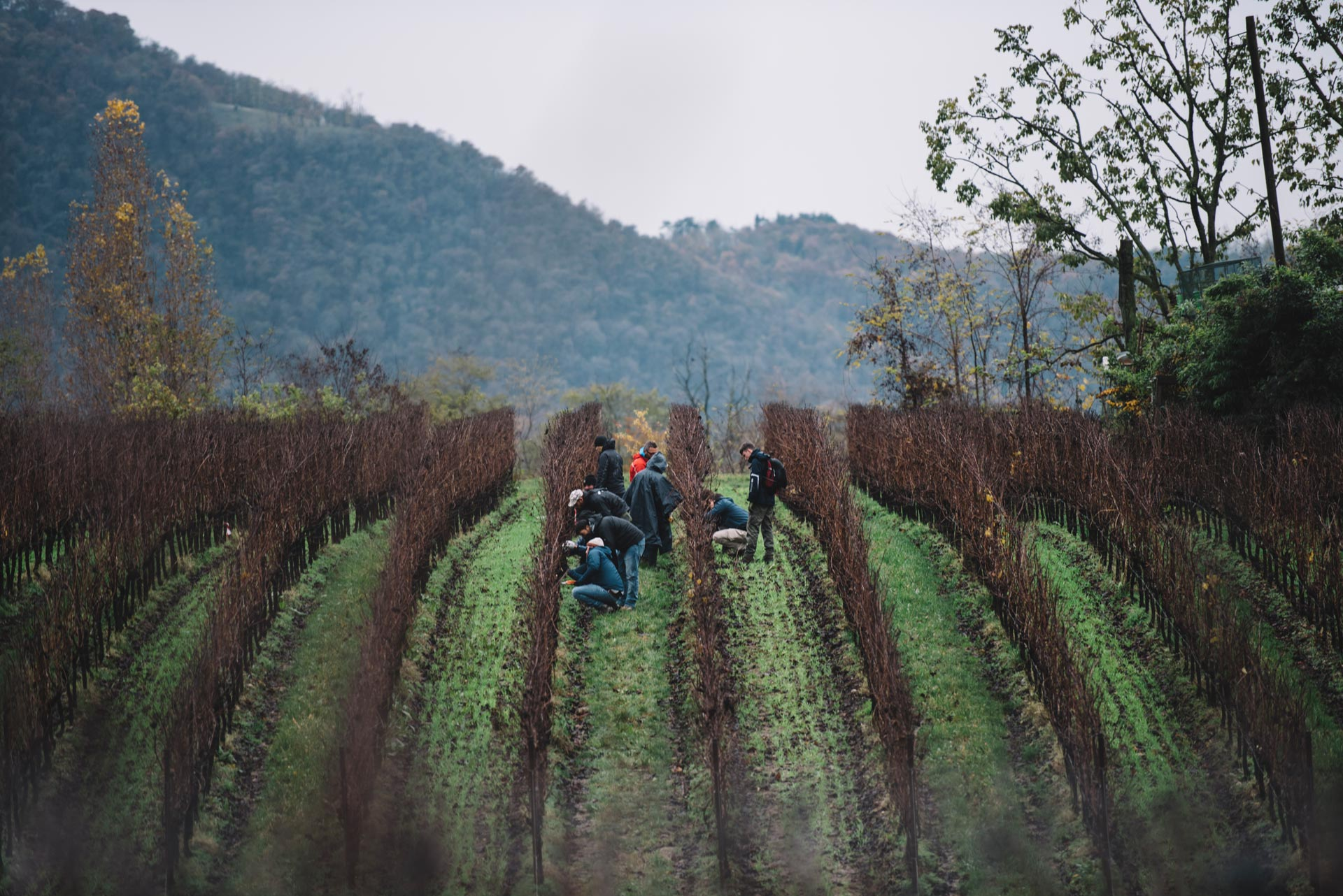 Tutoraggio in vigna | Bellavista | Lombardia | Franciacorta