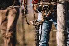 Sperimentazione | Schiopetto | Collio | Friuli Venezia Giulia