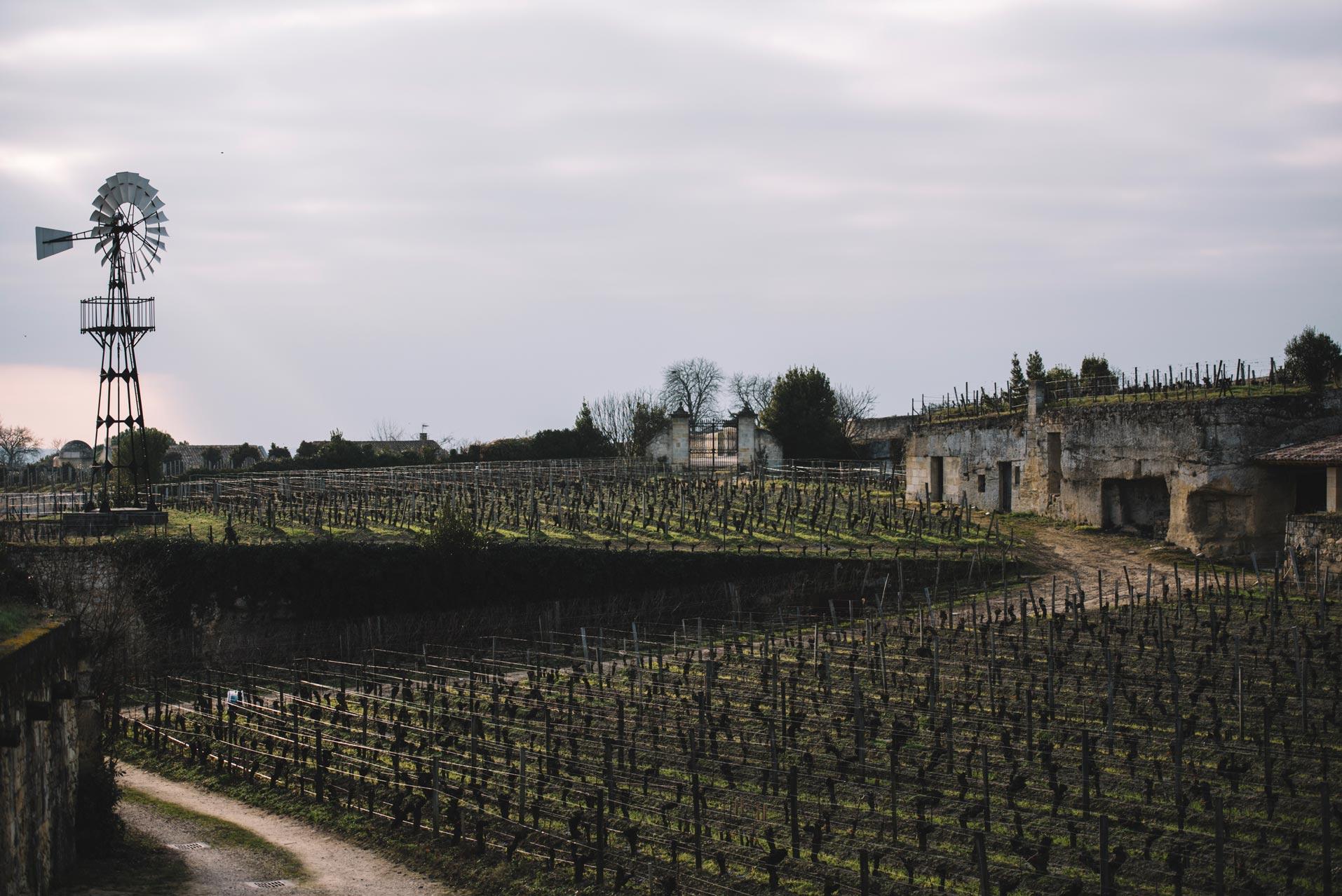 Winter training | Château Ausone | Saint-Émilion | Bordeaux