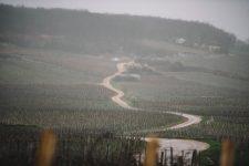Tutoraggio in vigna | Domaine Leroy | Romanée Saint Vivant | Bourgogne