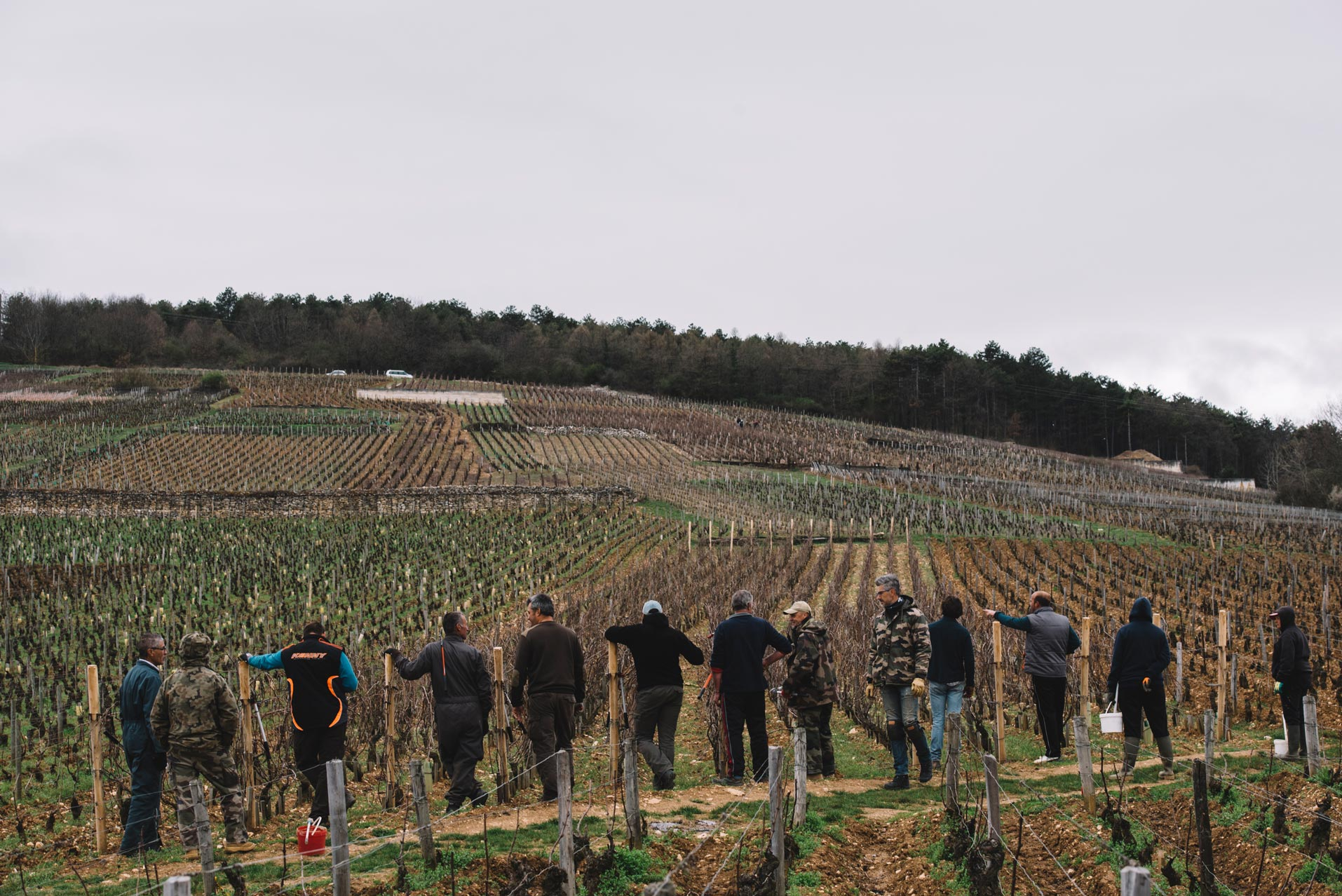 Tutoraggio in vigna | Domaine Leroy | Richebourg | Bourgogne