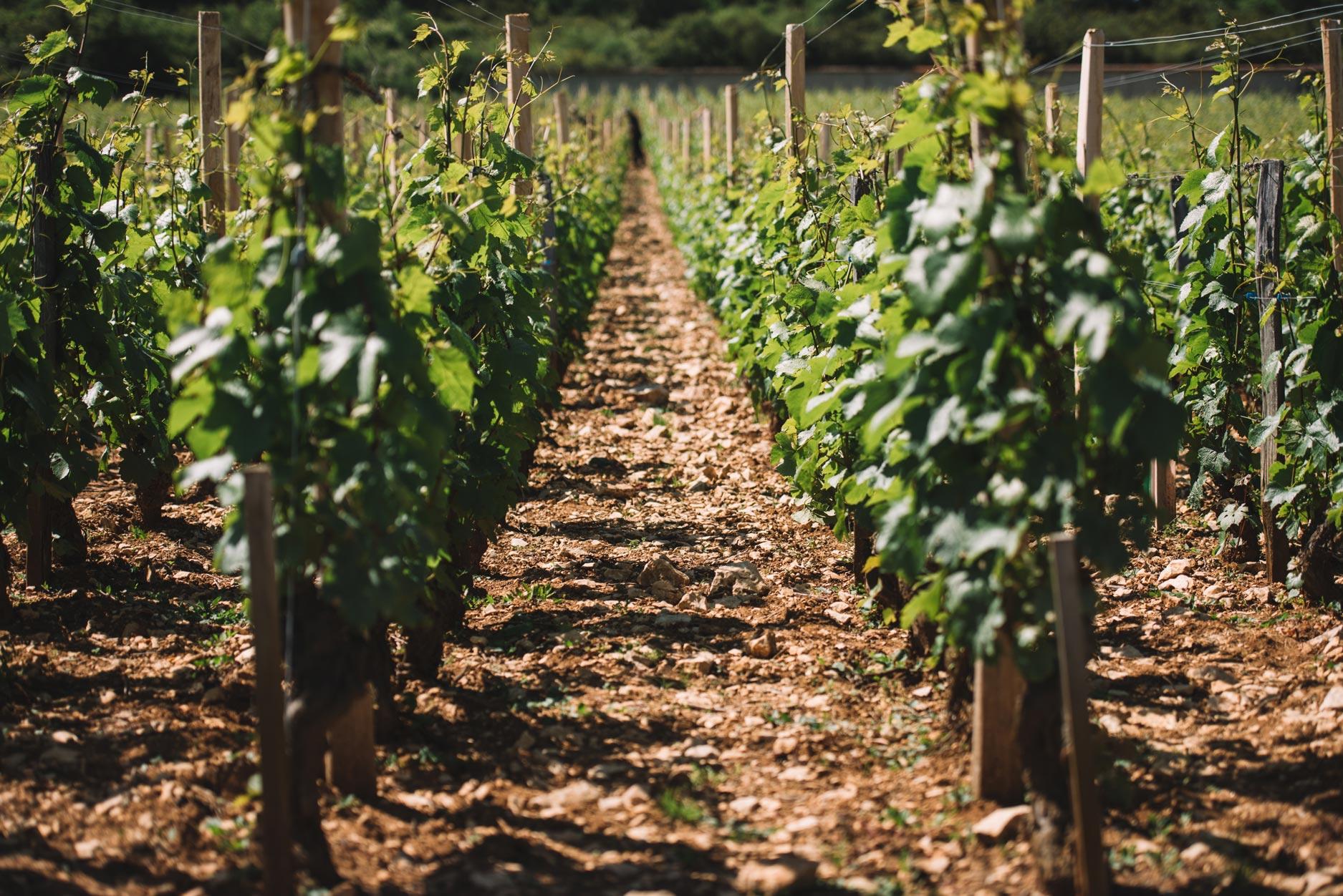 Clos de Vougeot | Domaine Leroy | Bourgogne