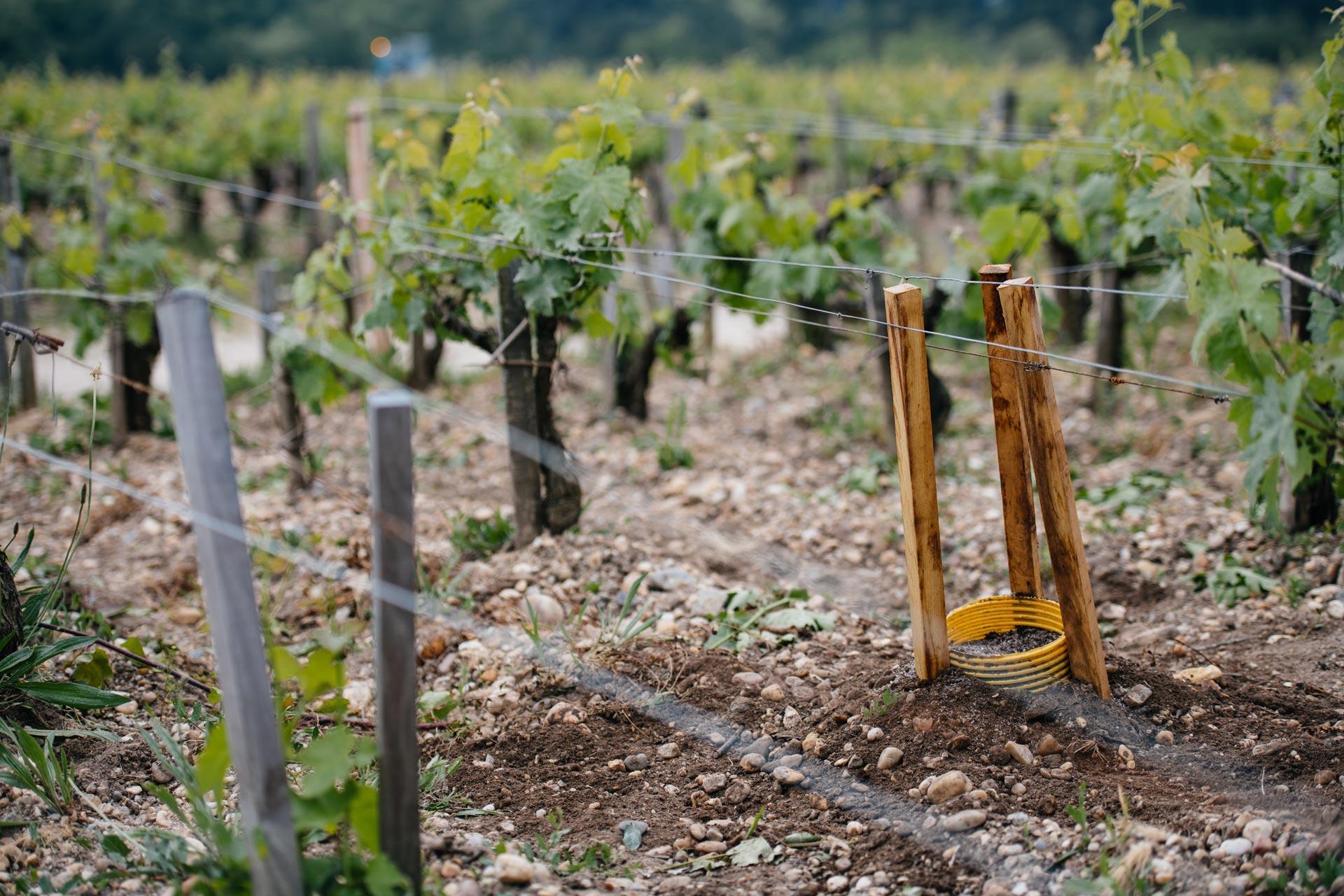 Innseto a spacco | Château Pontet-Canet | Pauillac | Bordeaux