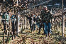 Formazione alla potatura invernale della pergola | Ferrari | Trento