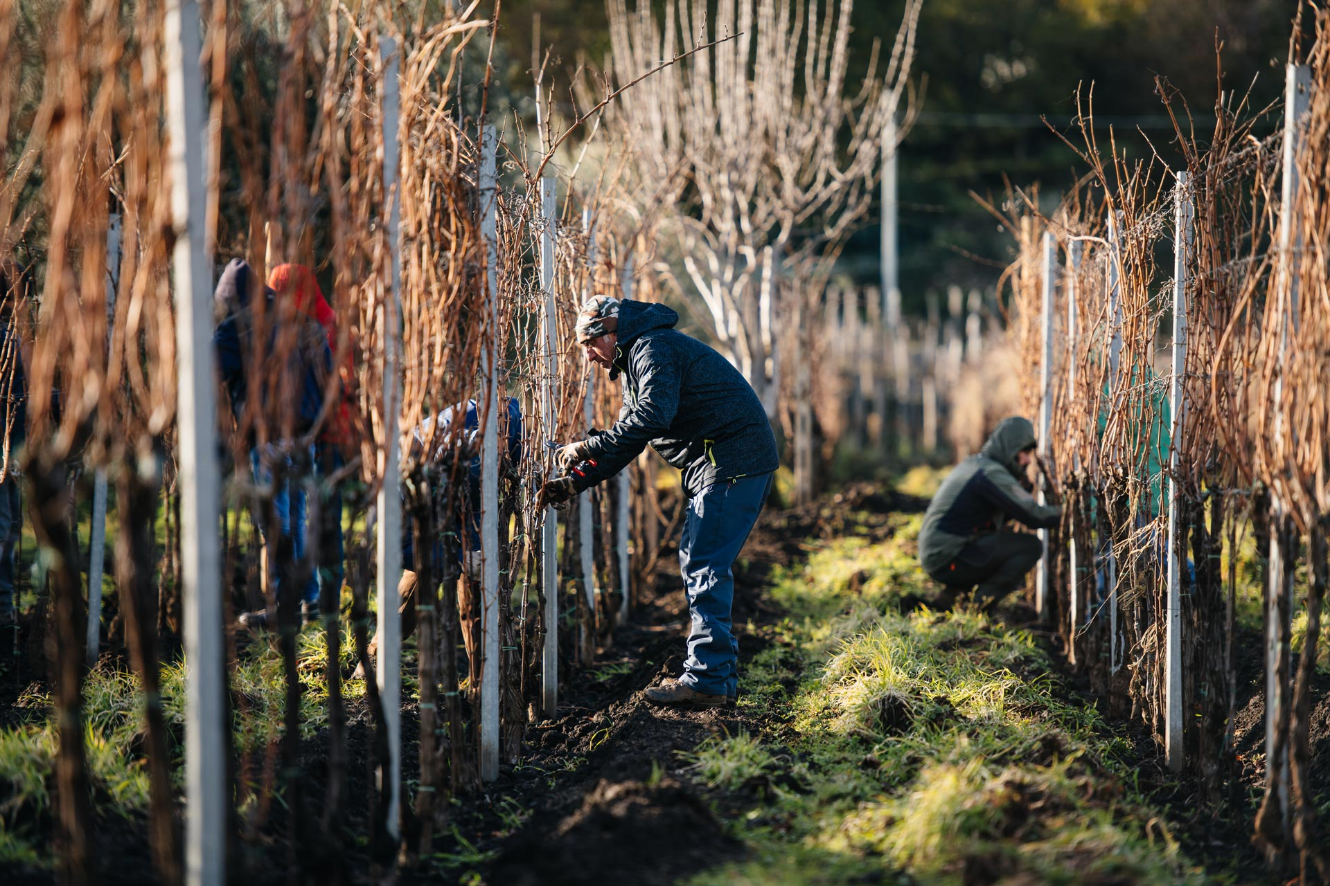 Formazione alla potatura invernale | Tenuta delle Terrenere | Etna | Sicilia